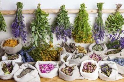 Hemoroid bitkisel tedavi